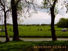 Friesische Schafskserei 00015 (nb-hjwmpa) Tags: friesische schafskserei
