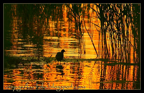 Golden Sunset at Lake Mogan by voyageAnatolia.blogspot.com