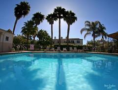 pool palms (artfilmusic) Tags: trees pool palm