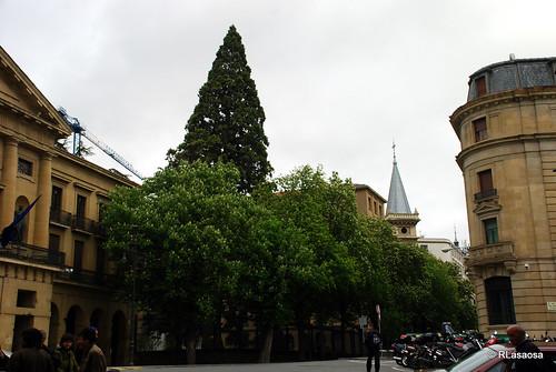 Vista de la sequoia de los jardines de Diputación (Palacio de Navarra)