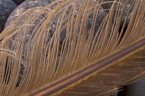 Luminous Feather
