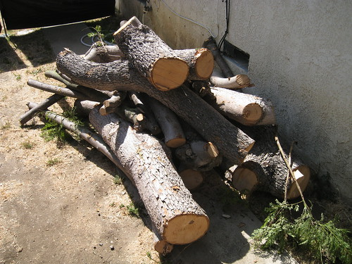 Jacaranda logs on my driveway