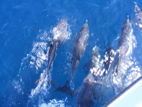 Our Dolphin Escort
