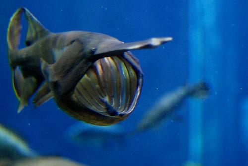 r TN Aquarium 345