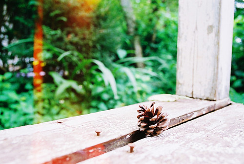 Light_Leak_pinecone