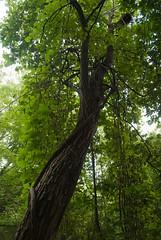 DSC_0060 (kleptobob) Tags: park mississauga floraandfauna erindale