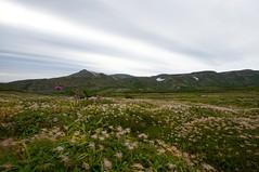 ミヤマサワアザミが咲くお花畑から烏帽子岳を望む