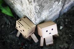 (sndy) Tags: sanfrancisco canon toy toys box figure figurine sindy kaiyodo yotsuba danbo revoltech danboard   amazoncomjp