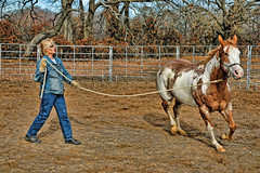 Workout in the Round Pen (Jeff Clow) Tags: ranch horse woman lady training texas exercise workout trainer equine gapr jeffrclow