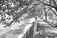 町田樹 画像99