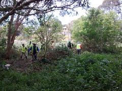 The GreenFingers team at work against lantana (GreenFingersLandcare) Tags: portmacquarie bushregeneration