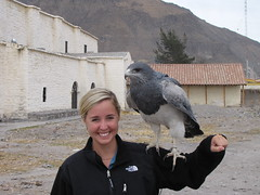 Andean Eagle & Blond Bombshell