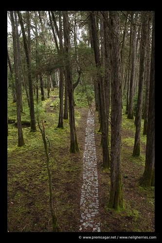 A true walk through nature