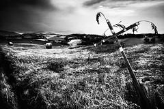 (Effe.Effe) Tags: bw italy monochrome rural landscape cross bn hills campagna marche biancoenero croce fieno rotoballe contadino hayballs marcheshire