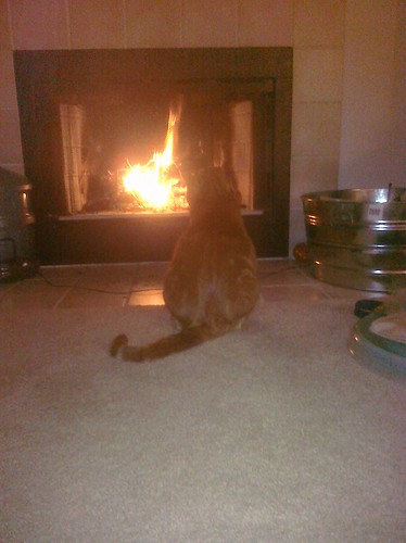 Ptw Leki enjoying Fireplace