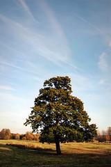 Lone Tree Portrait (lisaluvz) Tags: blue autumn sky tree nature field clouds miltonkeynes lone mk caldecotte lisaluvz