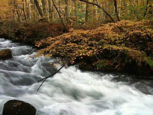 本日の最後は渓流紅葉散策。