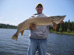 Giant northern pike (North Star and North Haven Resorts) Tags: canada haven plane lunch corporate star fly fishing cabin five north lodge resort manitoba gourmet shore pike float northern spa luxury walleye sauna outpost