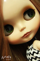 Ashelia