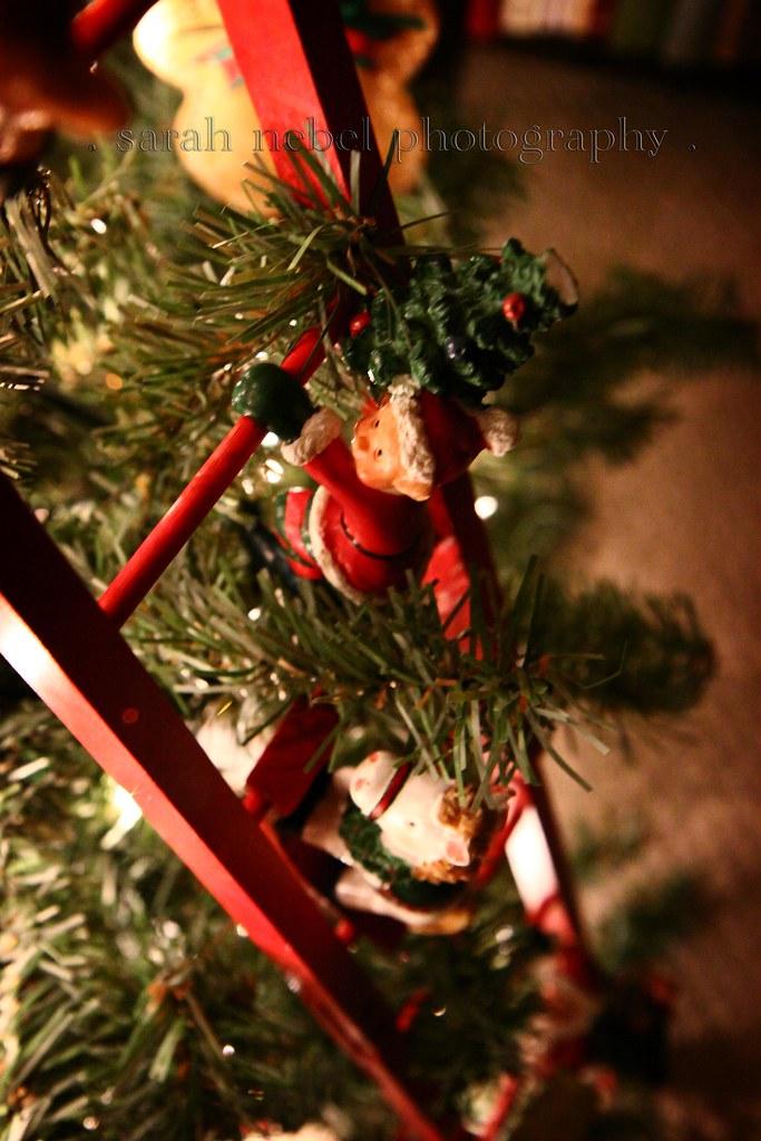 . climbing up the tree .
