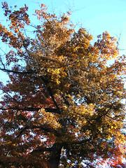 Fall Colors Boulder  DSCN0515