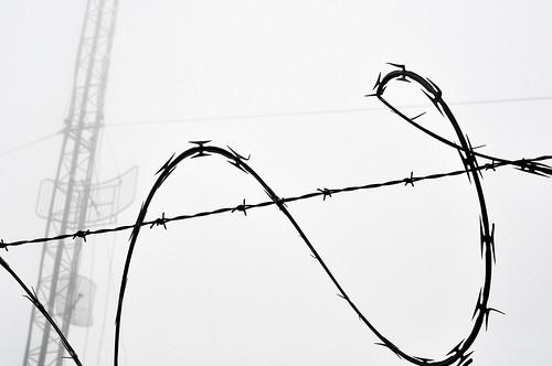 Concertina Wire (2)
