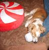 FUTAB Gone To The Dogs.... (Nanna J) Tags: dog pillow charlie futab feetuptakeabreak tojosansfeetandlegs