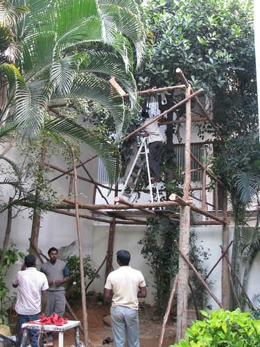 Tree_Top_House_Frame