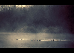 Ghostly procession (sparth) Tags: seattle lake birds fog painting washington moody flock foggy ducks textures redmond ghostly tress atmospheric marymoor sammamish lakesammamish 100400l fantomatic 5dmarkii