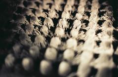 magnets (mariapiessis) Tags: film stpetersburg russia olympus saintpetersburg om2 sanktpeterburg питер россия