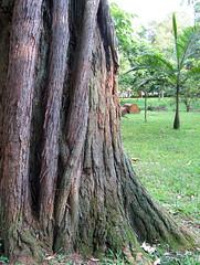 Isso é vida (Luiz Casimiro Fotografia) Tags: textura tronco árvore caule luizcasimiro