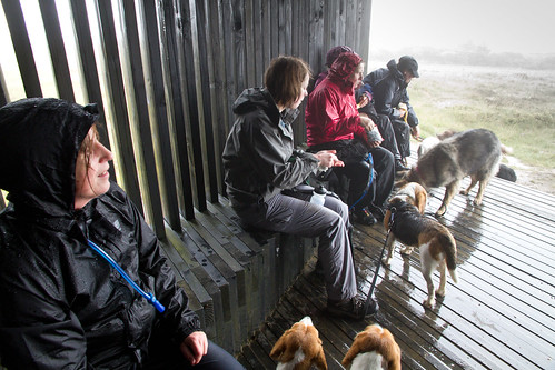 IMG_2391 - Shelter at the summit of Deadwater Fell