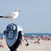 Seagull overlooking beach. Worldwide Photo Walk 2009 - Jones Beach, NY © 2009 Louis Trapani arttrap.com