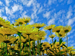 Something to do, something to love, and something to hope for (Syed Xain) Tags: life flowers blue pakistan sky macro love nature yellow happiness islamabad ppa againstsun flowerexhibition xain canons5is verybusythesedays