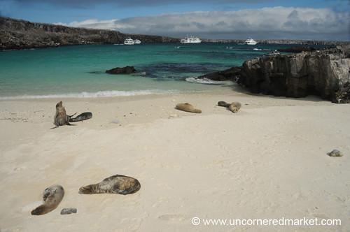 3804479832 80c67c3690 - Galapagos islands