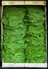 vine leaves (Patricia Fenn) Tags: food canon greek photography photographer market fresh greece crete produce local dolmathes organic dolmades grapevineleaves patriciafenn gettyimagesgreece1 patriciafenngallerycom