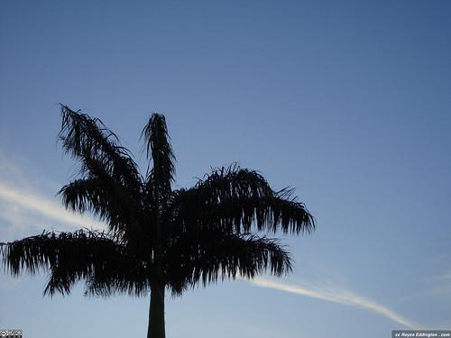 McAllen skies
