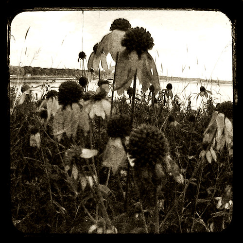 In the Weeds #1
