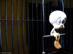 Tweety by Banksy (Lucho Molina) Tags: sculpture art museum bristol sadness tristeza loneliness sad arte cartoon banksy exhibition escultura triste museo soledad animatronic caricatura exposicion tweetie exposicin piolin pioln