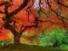 Autumn Colors at Portland Japanese Garden (David Gn Photography) Tags: autumn fall oregon portland landscape japanesegarden pdx portlandjapanesegarden hdr washingtonpark sigma1020mm japanesemapletree platinumheartaward platinumpeaceaward canoneosrebelt1i