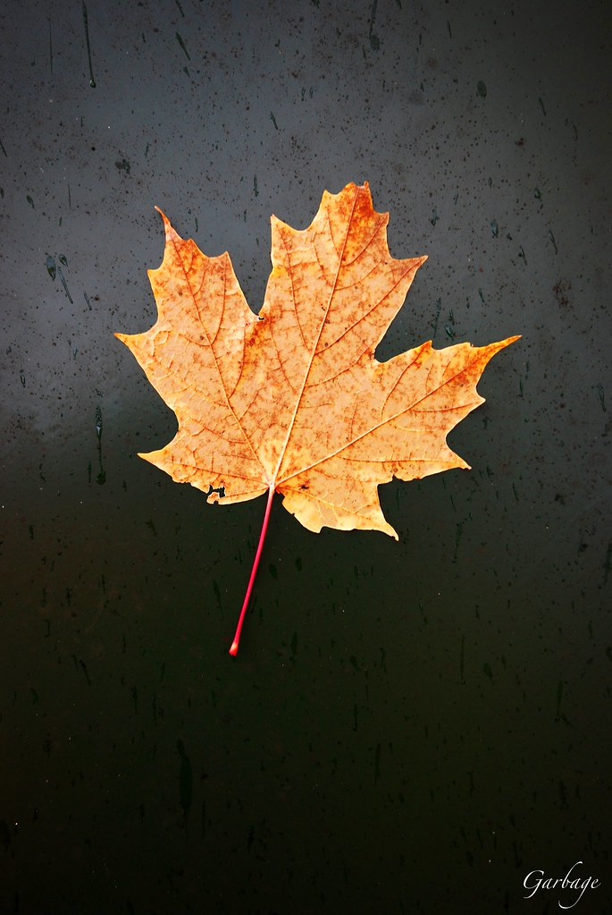 A yellow leaf on a dark green metal background.