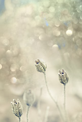 Crme (Faisal!) Tags: flowers white flower fall wednesday happy shiny frost bokeh off creme bud autmn faisal hbw
