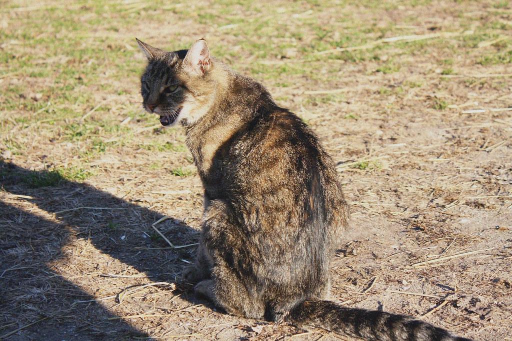 mischief meow