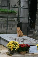 2009-11-21-PARIS-PereLachaiseCemeterie48-cat2