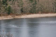 The Skater on Buck Lake 12/12/09 (PJ Peterson) Tags: frozenlake kitsapcounty bucklake hansvillewashington