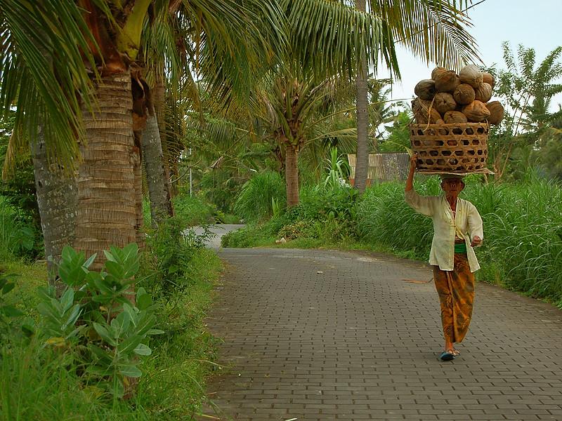 _coconuts_