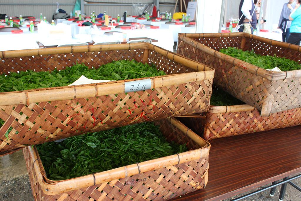 Inokura tea garden (12)