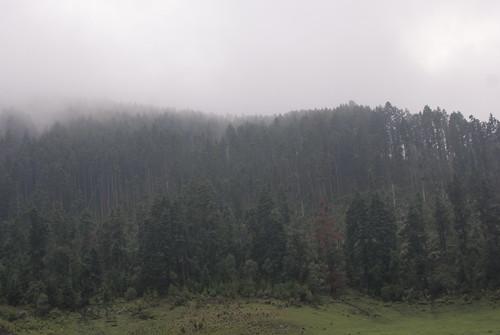 Neblina en el bosque