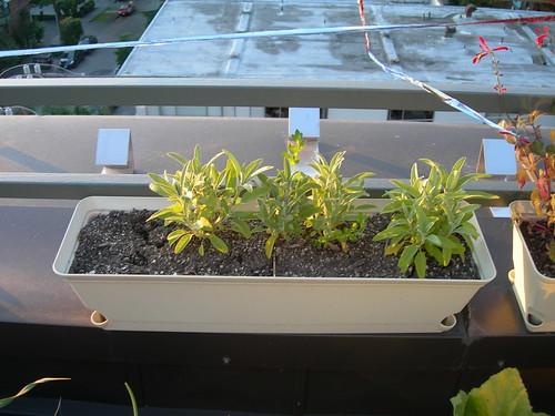 2009-07-03 Sage Comparison (2)