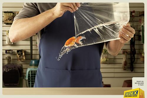 fish_8